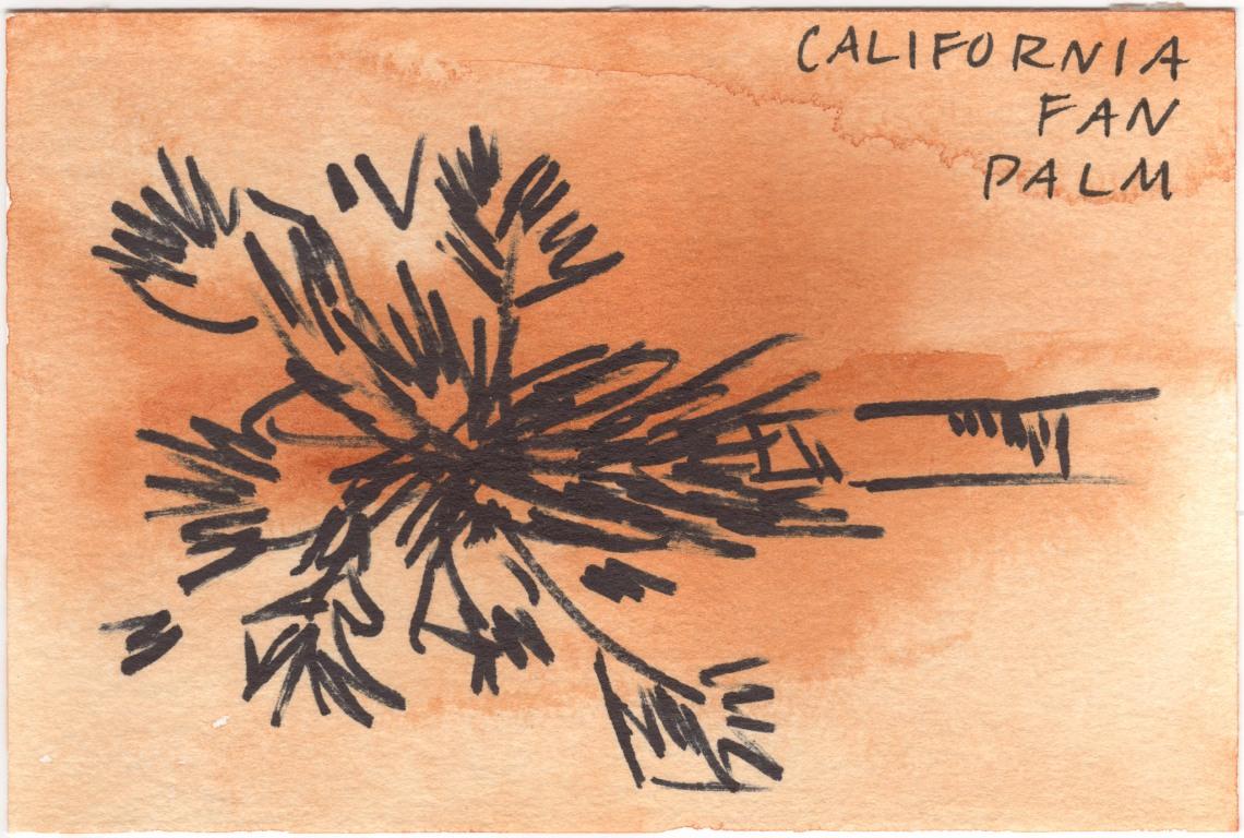 Court_Desert_Postcards__6